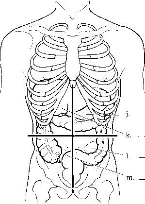 Abdominopelvic Regions And Quadrants Diagram