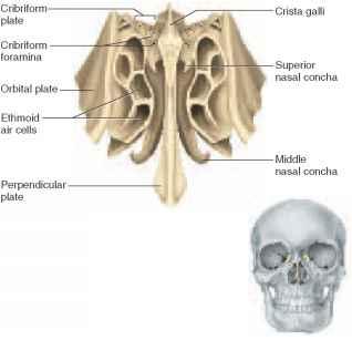 bear skull diagram furnas motor starters wiring diagrams cranial bones - unity companies rr school of nursing
