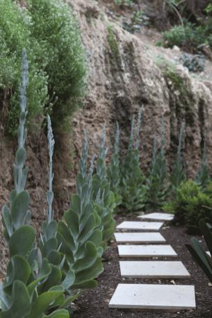 Richard Szklarz Architects - The Coombe Mosman Park 12