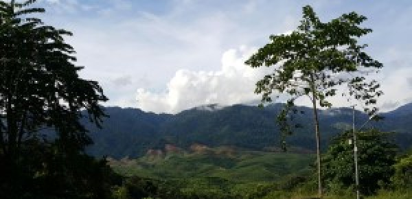 Deel van die reënwoud in die noorde van Maleisië wat Terrance tydens sy besoek aan die land aangedurf het.