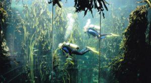 kelp_rest_divers_1140_630_80_s_c1_c_c