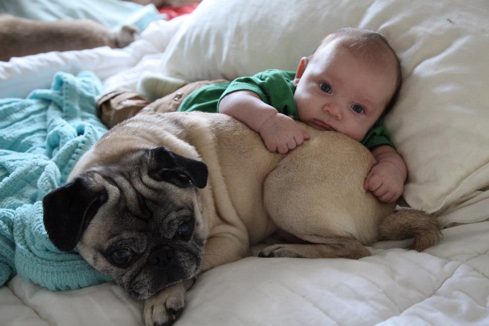 Moet jy jou hond voorberei vir nuwe baba?