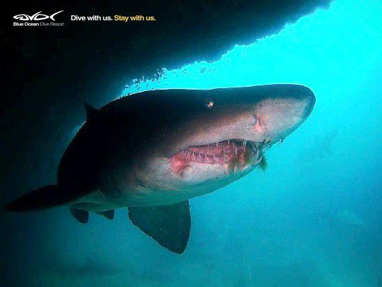 Haaie se wonderlike reuksintuig en magneetvelde