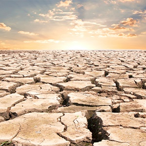 Landbou: die invloed van hitte en droogte