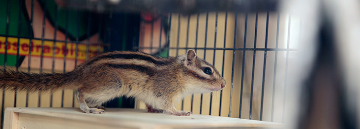chipmunk health and welfare