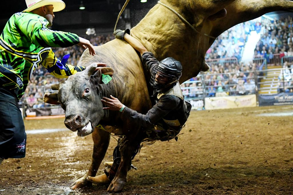 Outdated bull riding event unethical and inhumane  RSPCA