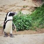 How to Check Linux OS Version