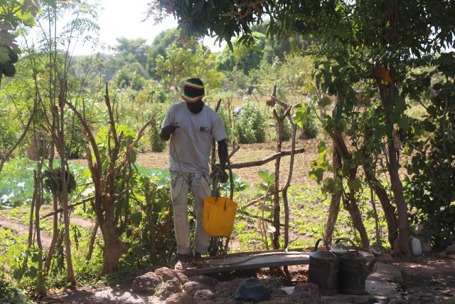 Dramane THIOMBIANO puisant de l'eau pour arroser sa salade