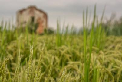 Casolare abbandonato. Briona