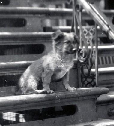 1932, Teddy