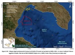 avvistamento-cetacei-nel-mar-Jonio