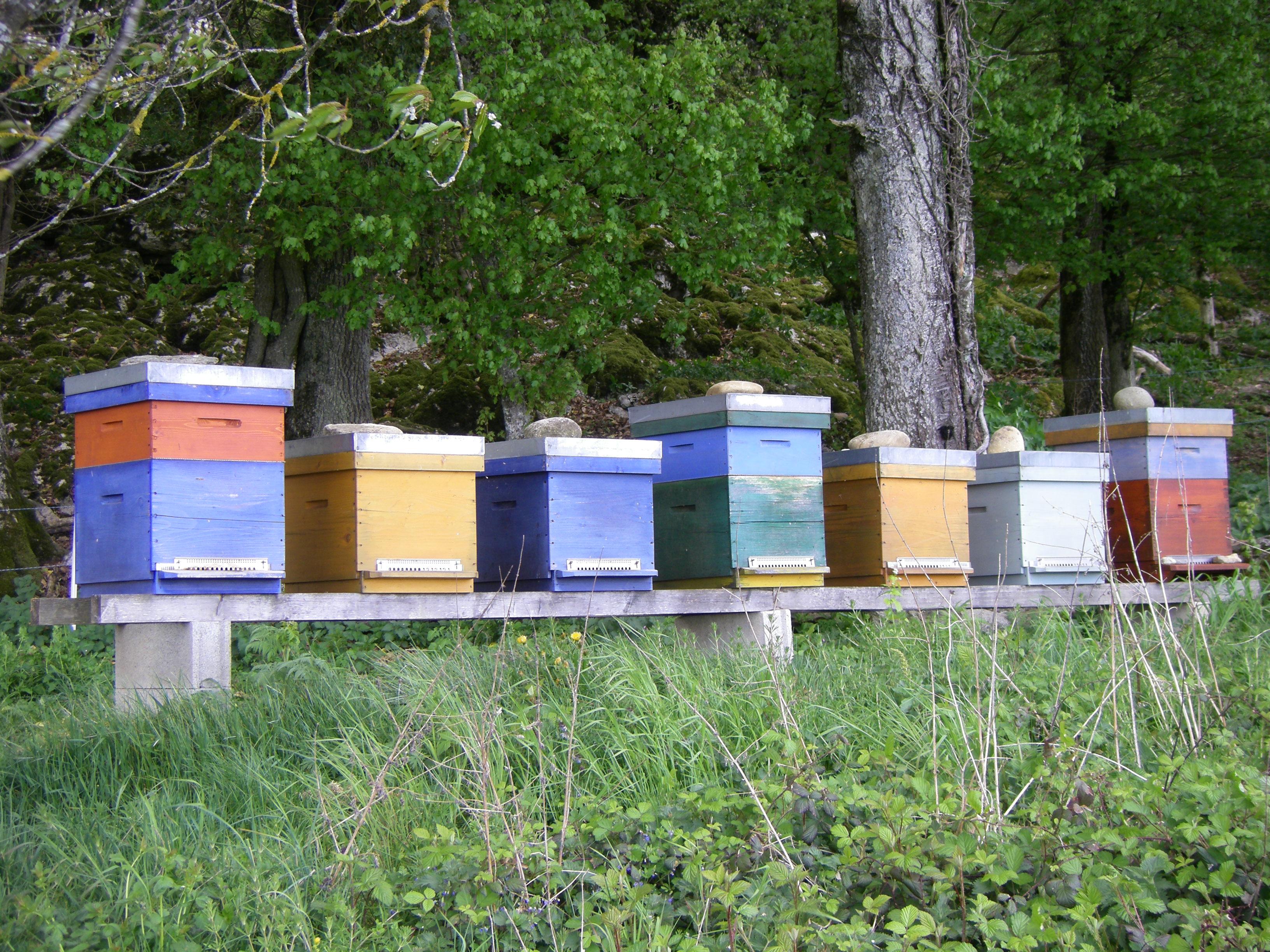 Les ruches de Geneviève Burkardt [RTS]