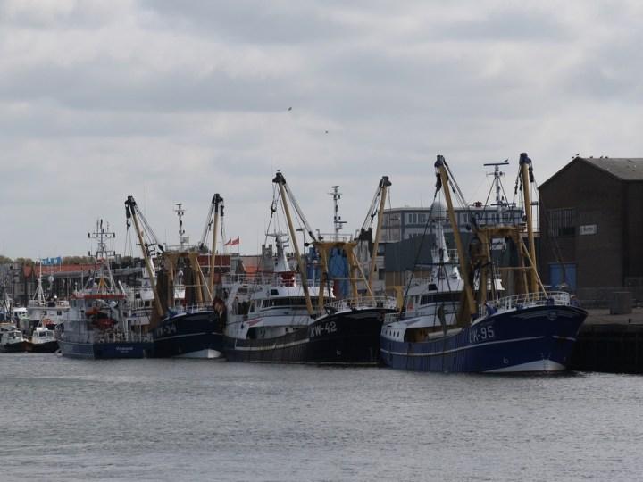 'Geen conflict tussen vissers Urk en IJmuiden'