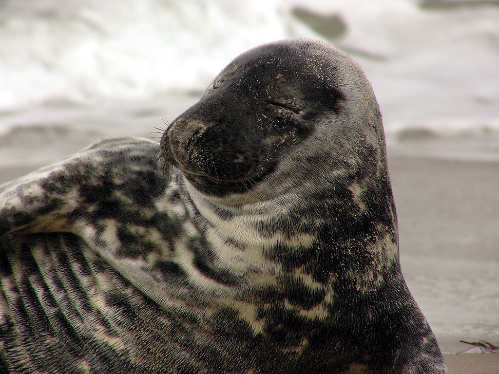 Jong zeehondje sterft ondanks redding