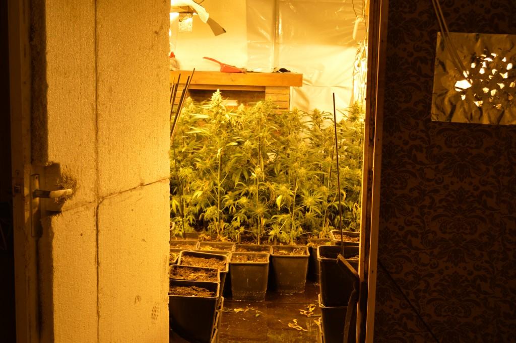 Wietplantage ontdekt midden in flat
