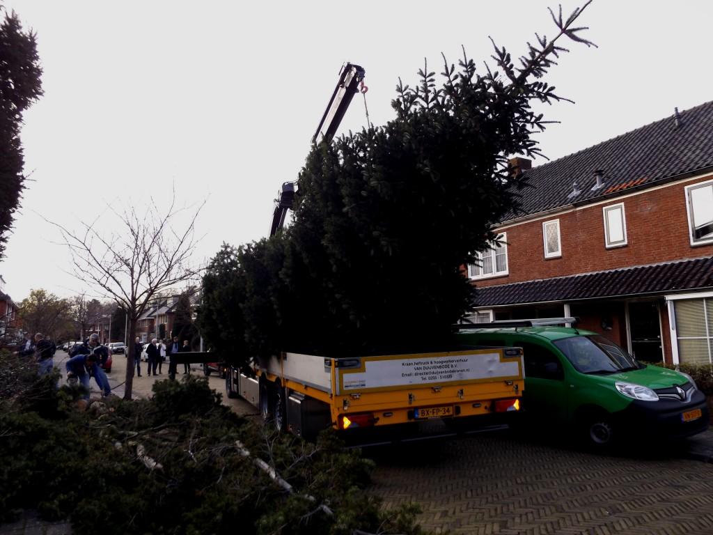 Kerstboom Driehuis