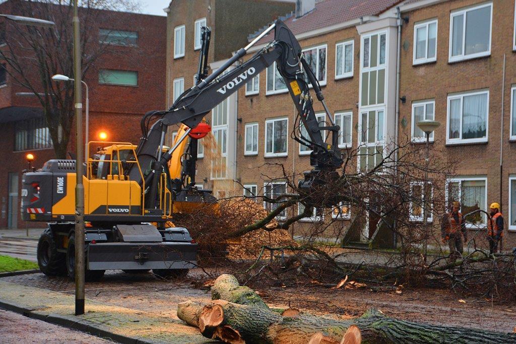 Bomen gekapt op Lange Nieuw