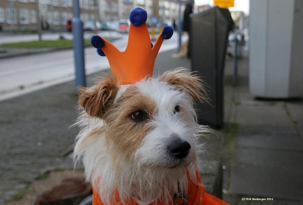 Koningsdag IJmuiden