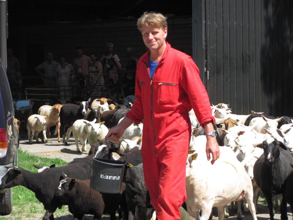 Schapenscheerdag op boerderij Zorgvrij