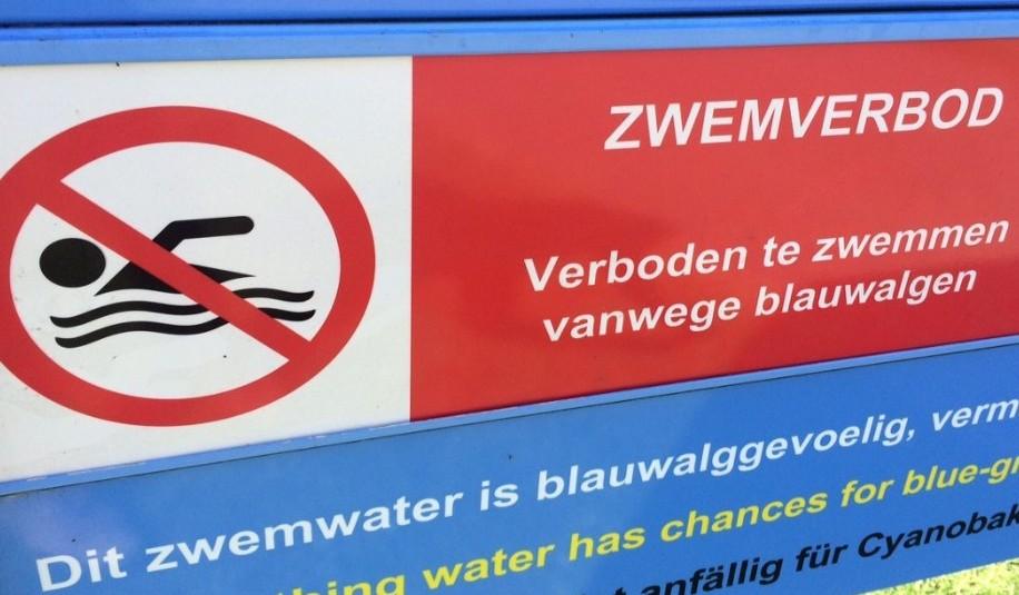 Giftige blauwalg in Velserbroek