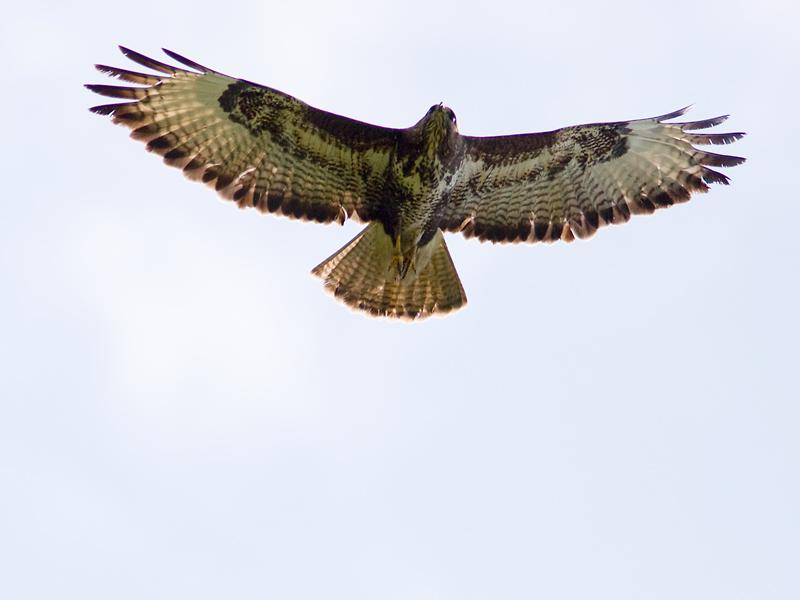 Vogelexcursie in Spaarnwoude