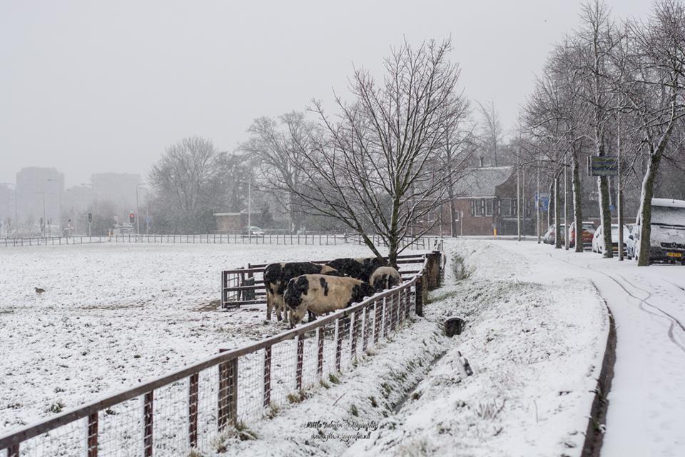 Sneeuw Jaap Bakker03
