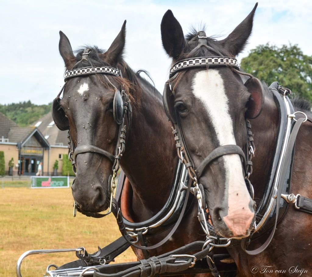 Uitslag Paardenkeuring Dorpsfeest Santpoort