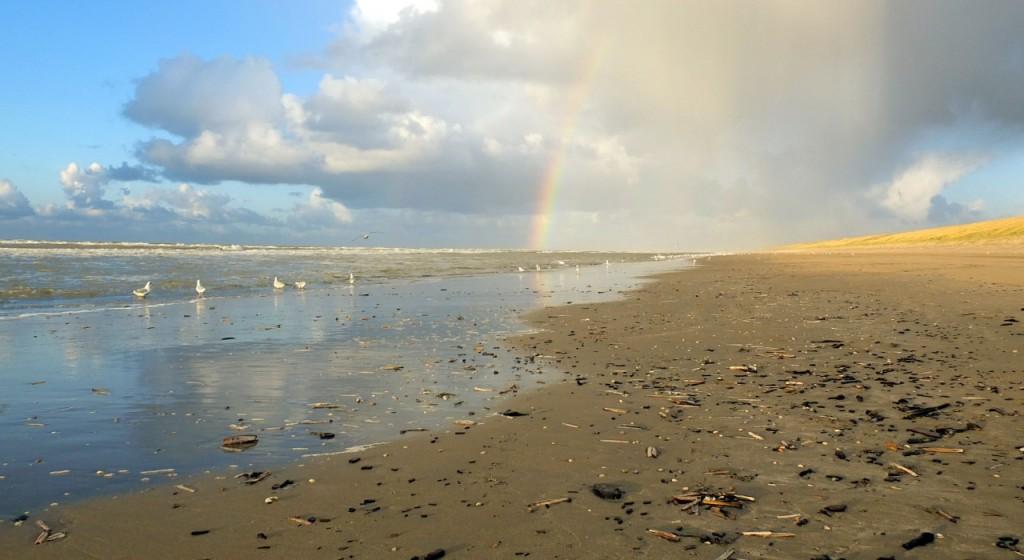 Strandexcursie Zuidpier IJmuiden