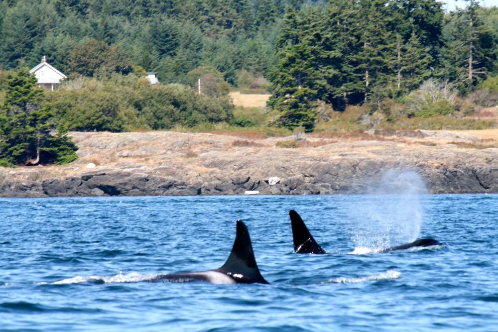 Orca Spirit Adventures * www.rtwgirl.com