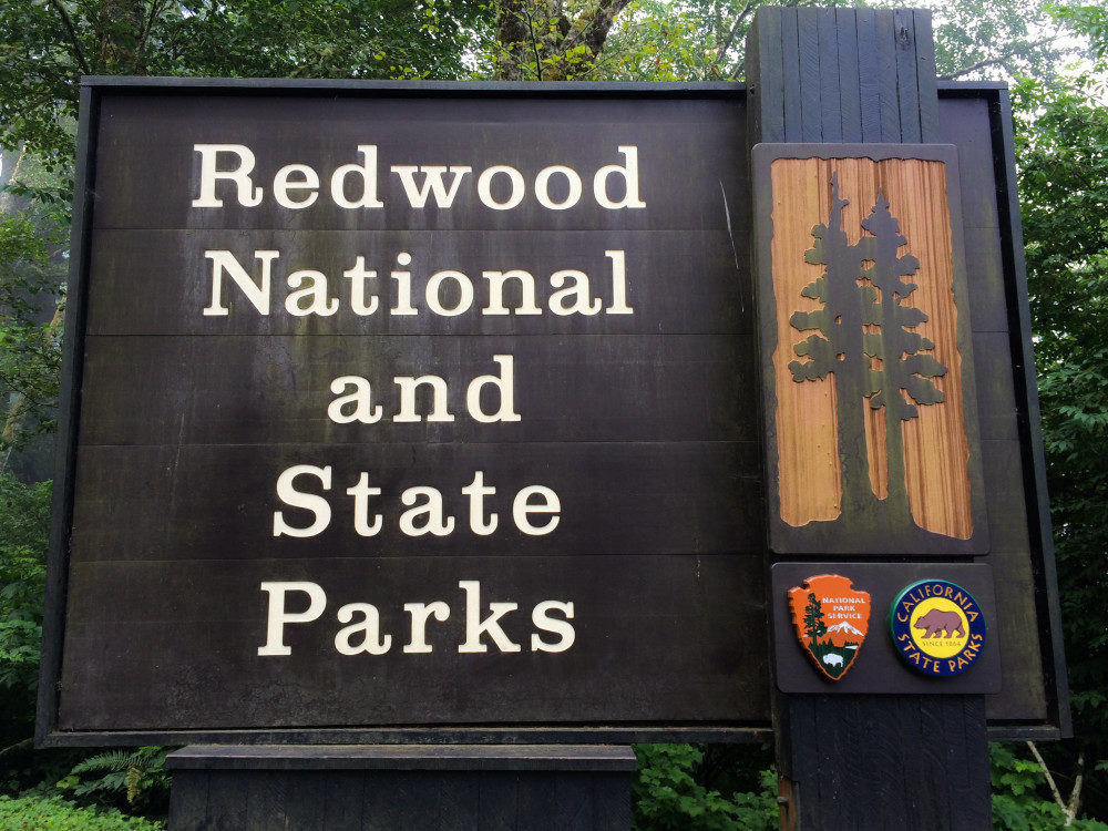 Redwood National and State Parks - California Road Trip Stops