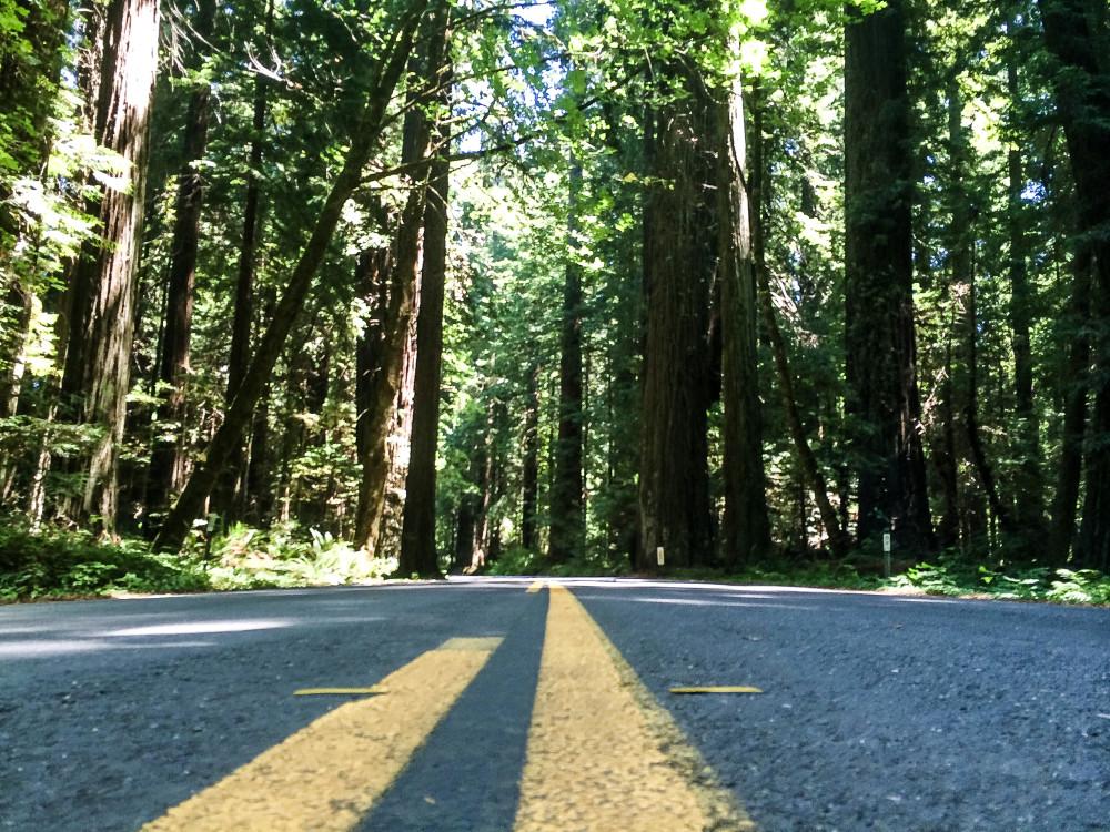 Avenue of Giants