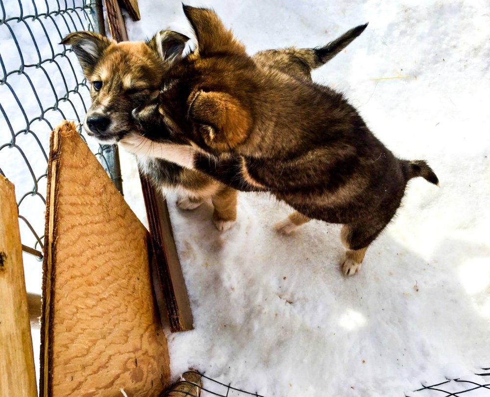 Mountain Man Adventures Dogsledding | www.rtwgirl.com