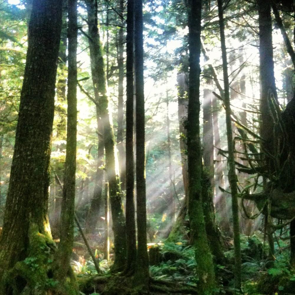 UBC Endowment Lands