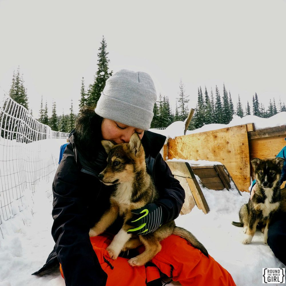 Dog Sledding at Sunpeaks 2016 | www.rtwgirl.com