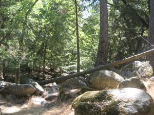 Boulders at the edge of the creek.