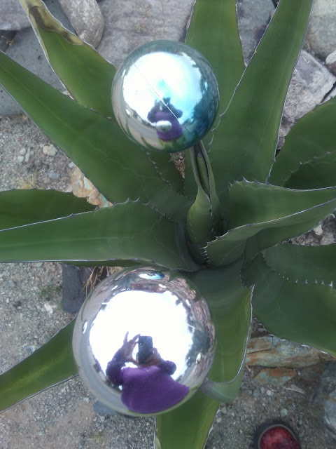 Looking down at a desert plant, two bright and shiny round Christmas tree ornaments rest on the points of the plant,. The reflection of the photographer shows in each of the ornaments.