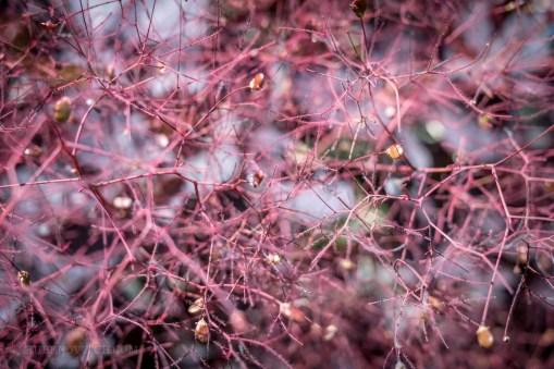 GardenTour-1440841