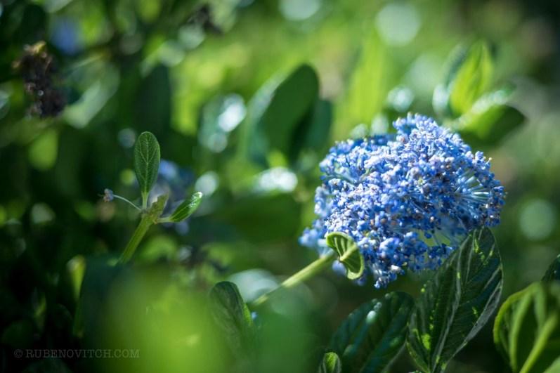 GardenTour-1450015