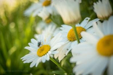 GardenTour-1450017