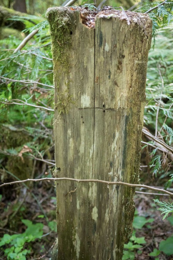 Have you ever seen Cedar spalt? We discussed the differences of old growth cedar vs. some other cedar he had been using as fencing. Results showed old growth lasted about three times as long. 30 years instead of 10.