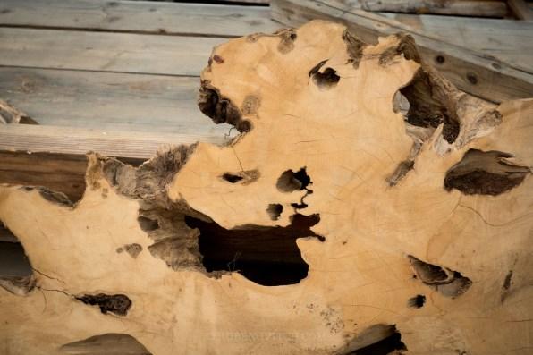 Yellow Cedar Root /Large Coffee table