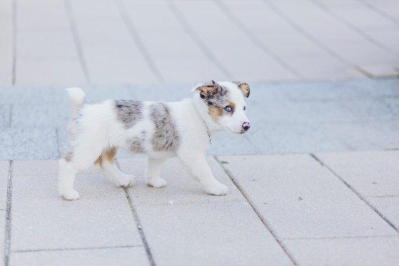 Pippa the puppy