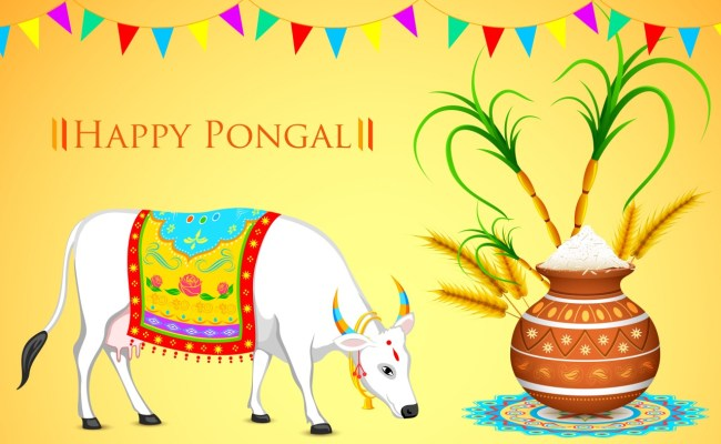 Pongal Harvest Festival Four Days Of Pongal How Pongal
