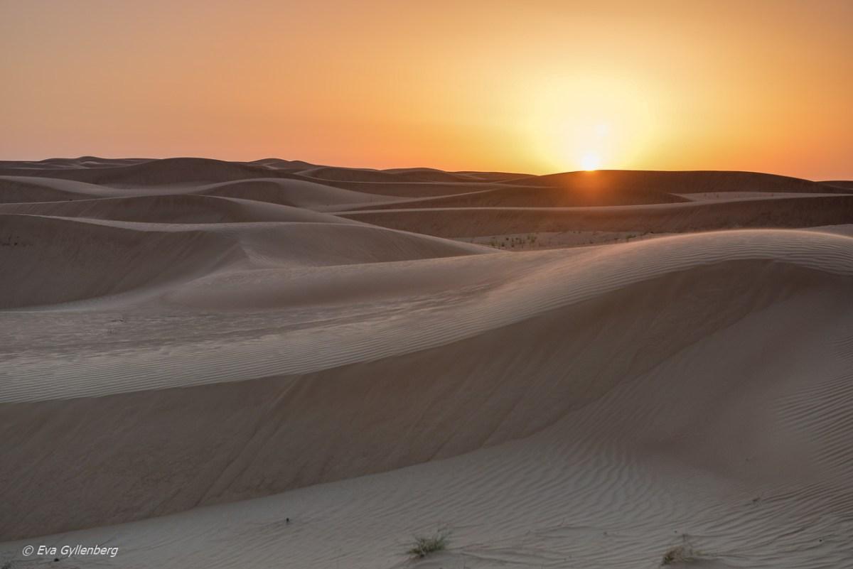 27 foton som får dig att vilja åka till Dubai