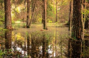 Tyresta nationalpark: Träsk