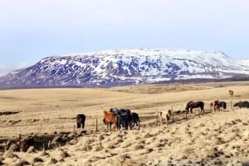 Island - Södra ringvägen