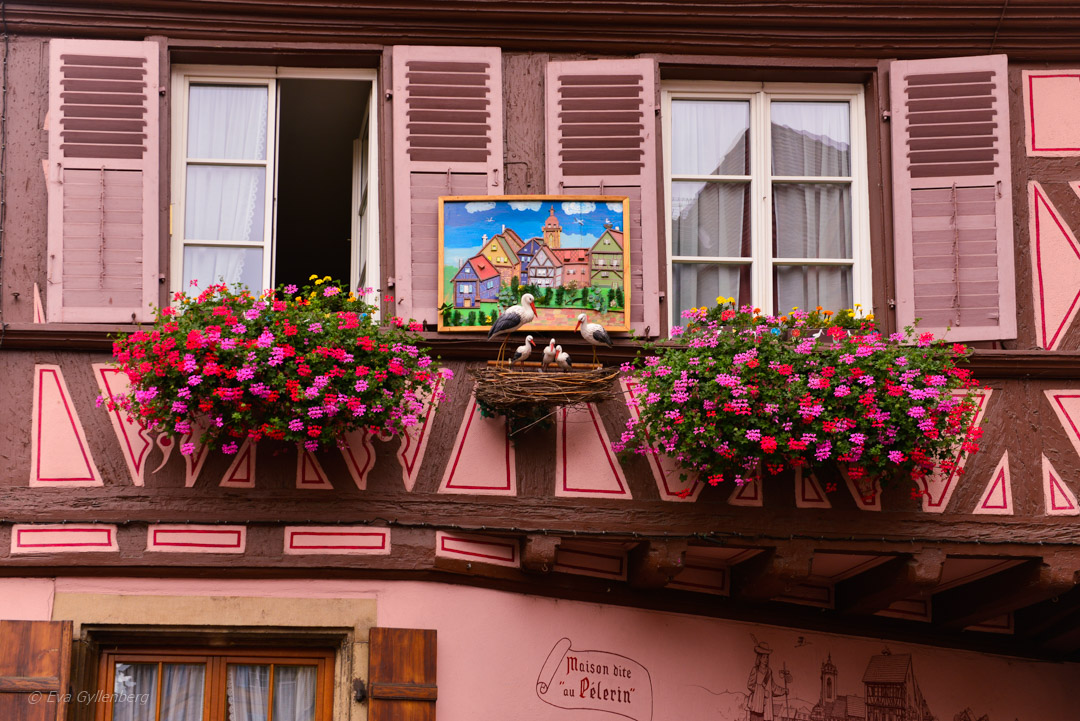 Storkar i Colmar