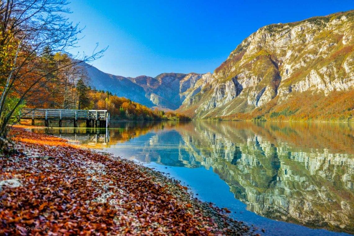 Vackra höstfärger vid en brygga vid Lake Bohinj - Slovenien