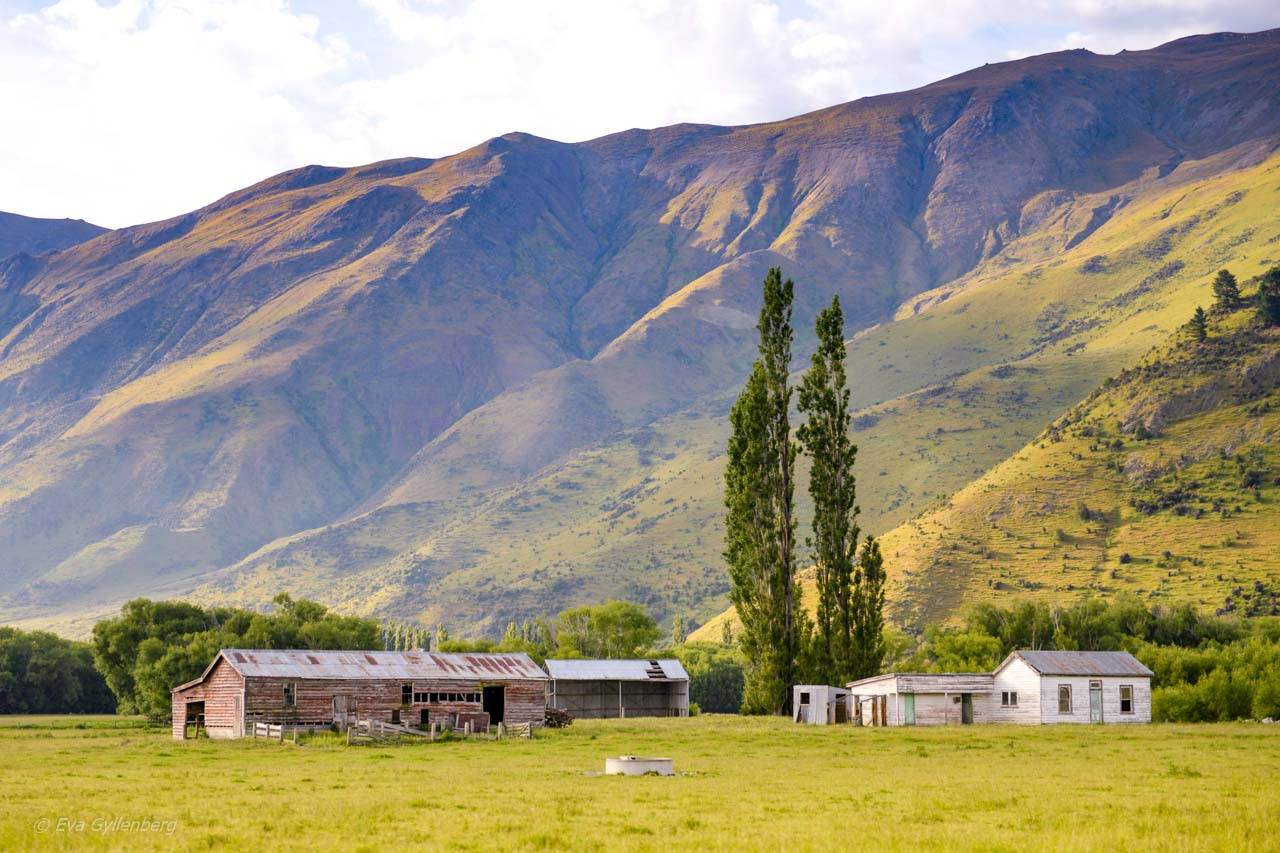 Byggnader vid veckade berg på Nya Zeeland