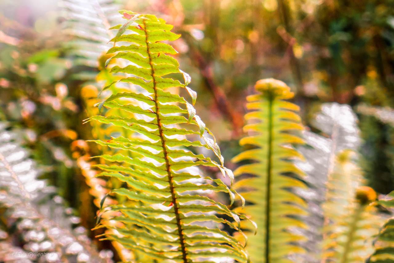 Växter på vägen till Milford Sound
